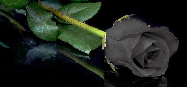 7 Plus Belles Roses Noires