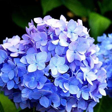 25 Plus Belles Fleurs Bleues