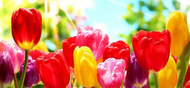Favorit 50 plus belles fleurs du monde JA72