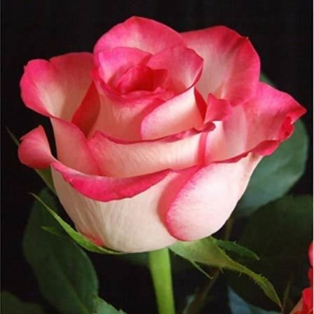 50 Plus Belles Fleurs Du Monde