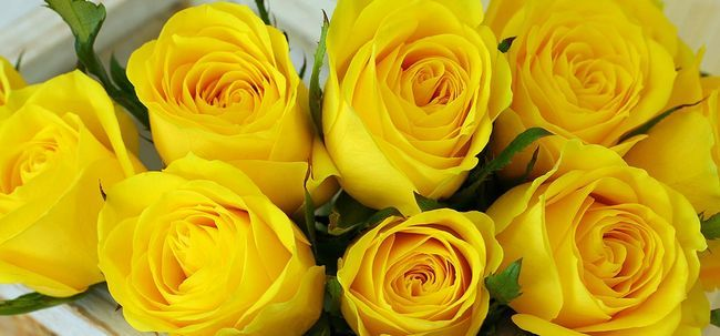 Top 10 Most Beautiful Yellow Roses Yellow Roses Flowers Induced Info